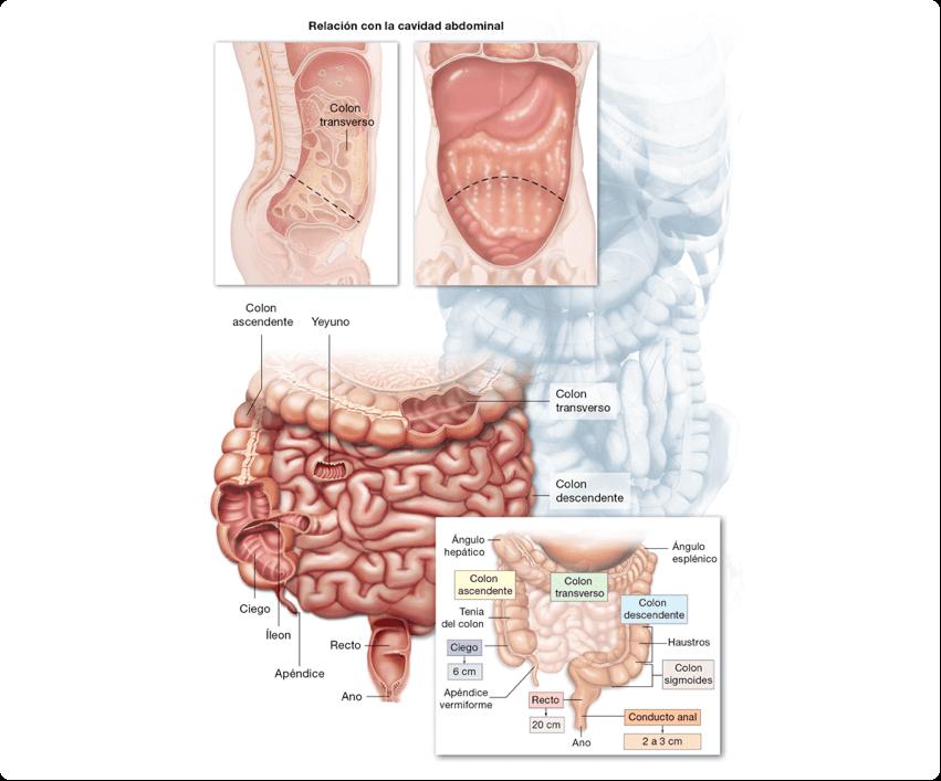 Cancer de colon localizado en el ciego - coronatravel.ro
